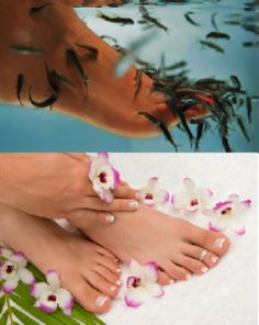 Pedicure and Spa at The Coral Bay - Coral Bay, Ireland's premier body care & pedicure spa group, offers a unique treatment that will love you relaxed and invigorated. Fish Pedicure, Pedicure Spa, Garra, Body Care, Ireland, Coral, Group, Natural, Unique