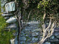 Mossy, stone-y goodness of Ireland (color and detail inspiration) Irish Moss, Moss Art, Ireland, Detail, Stone, Plants, Inspiration, Wedding, Color