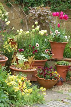 For beautiful spring pots of tulips ...plant them in ...