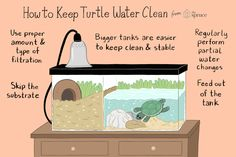 Keeping Red eared sliders' tanks clean can be a challenge; here are ideas to man. - Keeping Red eared sliders' tanks clean can be a challenge; here are ideas to manage water quality - Aquatic Turtle Tank, Turtle Aquarium, Aquatic Turtles, Turtle Pond, Diy Aquarium, Aquarium Ideas, Small Turtle Tank, Turtle Tank Setup, Turtle Tanks