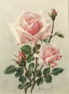 View Pink roses by Jan Voerman Jr. Browse upcoming and past auction lots by Jan Voerman Jr. Art Floral, Floral Vintage, Vintage Flowers, Watercolor Flowers, Watercolor Art, Vintage Rosen, Raindrops And Roses, Beautiful Rose Flowers, Rose Pictures