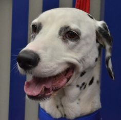You too can help beautiful animals such as the lovely, Shadow, find a new home through Battersea Dogs & Cats Home and Bissell. To #RehomeABatterseaDog call 0843 509 4444.