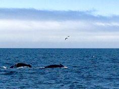 Watching whales in Monterrey Bay, CA.