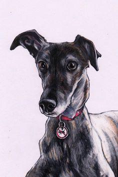 Whippet drawing. Custom pet art by Jim Griffiths.https://www.etsy.com/listing/216347712/custom-pet-portrait-by-jim-griffiths?ref=shop_home_feat_1 WHIPPETS