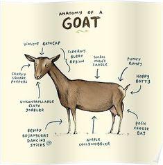 Anatomy of a Goat Art Print by Sophie Corrigan - X-Small Funny Animals, Cute Animals, Animal Memes, Animal Humour, Animal Pics, Farm Animals, Goat Art, Animal Anatomy, Goat Farming
