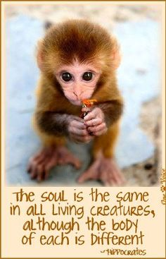 Animals have just as much right to be here as we do. Live and let live. ✌