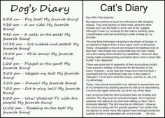 Susan Beebe - Google+ - Dog vs. Cat Diary - a day in the life - so funny!