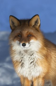 The Incredible Mr. Fox
