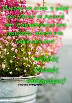 Herbs, Plants, Greek Sayings, Herb, Plant, Planets, Medicinal Plants