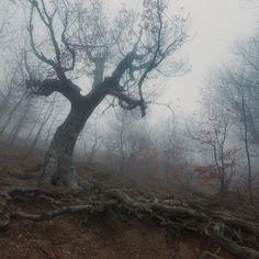 35PHOTO - Андрей Уляшев (Mercand) - Привратник
