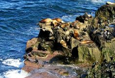 8 Things You Need to Know Before Visiting the La Jolla Cove Seals https://www.lajolla.com/guides/la-jolla-cove-guide/?utm_medium=blog&utm_source=ctabutton&utm_campaign=8%20know%20visitng%20seals