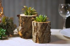 Wood Succulent Holder Log planter Natural Wood by GFTWoodcraft
