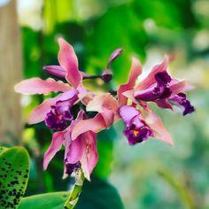 Another day of blooms at #rainbowsendgarden. #flower #flowers #garden #mygarden #inbloom #bloom #pretty #gorgeous #flowerstagram #nature #florida #southflorida #floridalife #gardening #gardenlife #enjoy #photography #orchids #orchid #orchidlover #orchidea #orchidstagram #sunday