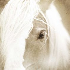 Horse photography White horse photo Horse by CarlChristensen, $30.00