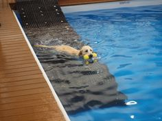 37 Awesome dog pool ramps images