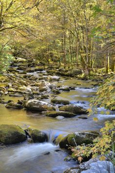 Fall in the Tremont area of the Great Smoky Mountains National Park