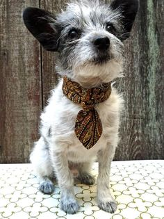 Vintage upcycled tie collars for dogs. I die.