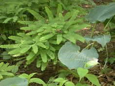 The Shady Nook - Designing a Garden for Partial Shade: The Look of a Natural Woodland