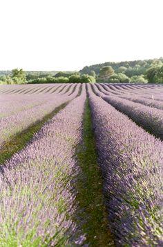8 Aesthetic Lavendar Ideas Lavender Fields Lavender Farm Lavender