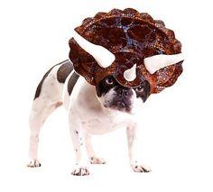 Pet Dinosaur Dog Costumes #dog #pet costumes#