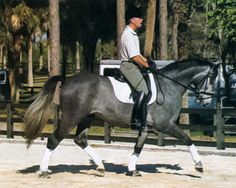 George Williams' Kindergarten Exercises to Learn the Aids | Dressage Today