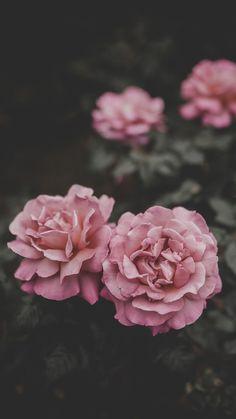 Luxury Flower Wallpaper Tumblr iPhone