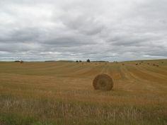 Field outside of Fergus Falls Mn