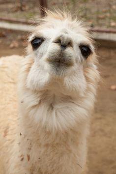 Look at that face! Rancho Las Lomas Wildlife Foundation