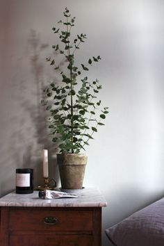 bedroom plant for decor