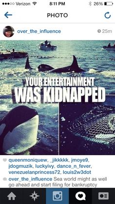 Say NO to Sea World! #blackfish orca, seaworld, animal abuse, animal cruelty, animal rights