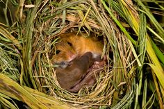 From the studio - where the pair documented tiny newborns and their first few weeks of life - to the great outdoors where all of the 30 mice were eventually released, the pictures take viewers through a variety of events faced by the mice
