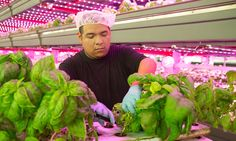 Alternative farming companies like FarmedHere see a bright future in indoor agriculture, which they say can take over local food production