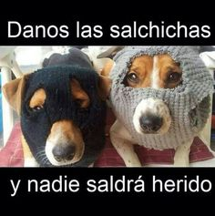 Give us the sausages and nobody gonna die. Jack Russells, Funny Animal Pictures, Funny Animals, Cute Animals, I Love Dogs, Puppy Love, Cute Puppies, Cute Dogs, Funny Dogs