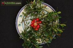 Eugenia mattosii / pitanguinha-de-mattos