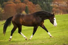 """equine-images: """"Colonel BN Nightstar has the most perfect backline I've ever…"""
