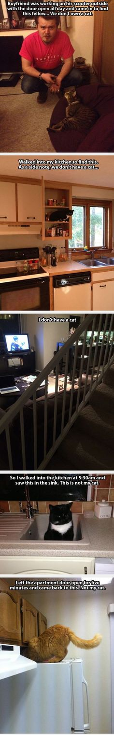 #Cat #animals - When People Find Random Cats Inside Their Homes Crazy Cats, Cats Too Funny, Cat Eating, Cat Food, Cats Ha, Lol Cats, Crazy Cat Lady, Cat Inside, Cat Burglar