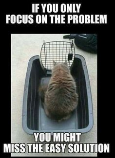 Lol. Poor kitty!