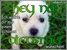 Dienstag Bilder - Jappy GB Pics - Wochentage - 005-hund-dienstag-www.gb-stylez.de.jpg