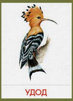 Cute Baby Cartoon, Color Pencil Sketch, Log Cabin Quilt Pattern, Bird Artwork, Free Photoshop, Animal Cards, Botanical Art, Beautiful Birds, Easy Drawings