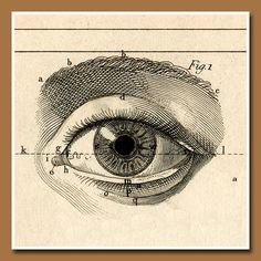 Anatomy for Artist - Ojo del alma Eye Illustration, Medical Illustration, Arte Black, Anatomy Art, Eye Anatomy, Vintage Medical, Arte Popular, Eye Art, Vintage Ephemera