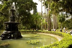 """The Rio de Janeiro Botanical Garden or Jardim Botânico is located at the Jardim Botânico district in the """"Zona Sul"""" (South Zone) of Rio de Janeiro.  The Botanical Garden shows the diversity of Brazilian and foreign flora. There are around 6,500 species (some endangered) distributed throughout an area of 54 hectares, and there are numerous greenhouses.Jardim Botânico, Rio de Janeiro"""