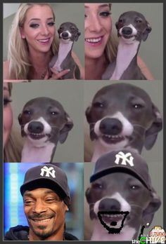 Snoop Doggs twin brother is a real dog dawg! This is a funny picture about Snoop Dogg and how he has a lookalike who is Jenna Marbles dog! Really Funny Memes, Stupid Funny, Funny Cute, The Funny, Funny Stuff, Animal Jokes, Funny Animals, Funny Animal Pictures, Funny Photos