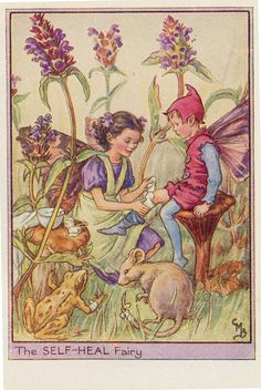 Cicely M Barker Fairies of the wayside ill 11 the selfheal fairy 1948 | Flickr - Photo Sharing!