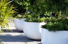 Moore Park Pots by Ubris Metal Planters, Large Planters, Planter Pots, Moore Park, Pottery Pots, Big Plants, Outdoor Rooms, Outdoor Ideas, Rooftop Garden