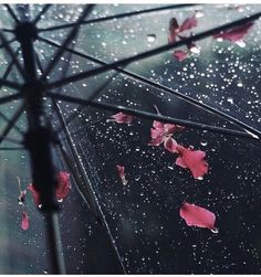 Rain and Coffee Clear umbrella rain drops with pink leaves Rainy Day Photography, Umbrella Photography, Color Photography, Beauty Photography, White Photography, Photography Poses, Sound Of Rain, Singing In The Rain, Rain And Coffee