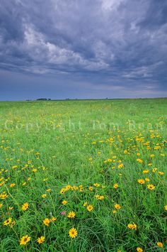 iowa prairies | ... tallgrass prairie remnant north of Manson, Iowa, AGPix_0501