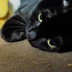 クロチア blackcat