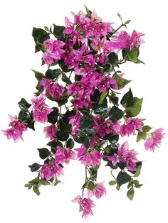 25in. Bougainvillea Hanging Bush in Two Tone Pink
