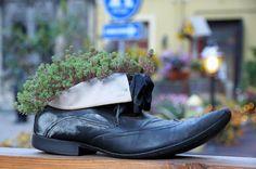 Eine elegante schwarze Schuh sitzt auf einem Holzgestell mit Blick auf das Fenster und ist mit einem gut gewählten Kraut, das genau in den Schuh formschöne Eleganz verbindet bepflanzt.