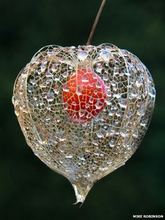 Gardening Autumn - Chinese lantern - With the arrival of rains and falling temperatures autumn is a perfect opportunity to make new plantations Exotic Flowers, Beautiful Flowers, Photo Fruit, Chinese Lanterns Plant, Seed Pods, Jolie Photo, Patterns In Nature, Natural Forms, Botanical Art